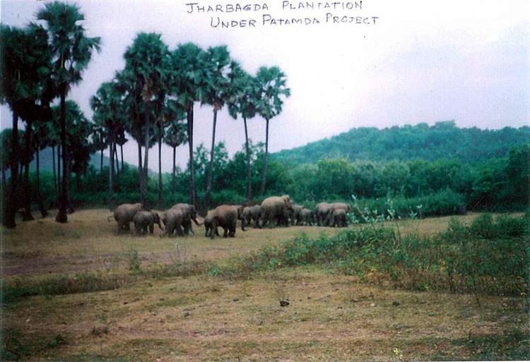 2006年には、森に象の群れが戻りました。