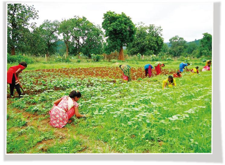 有機農法を学んでいるところ
