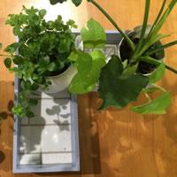 水もれ知らずの植木鉢置きボックス