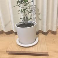 観葉植物のためにキャスター台を作ります!