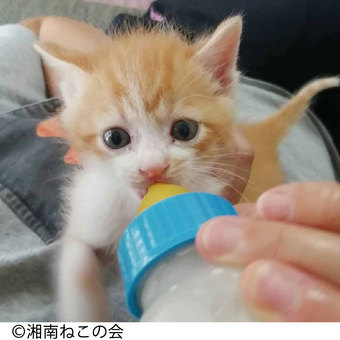 【Merry Point(1,500mr)】動物たちの保護と飼い主探し支援