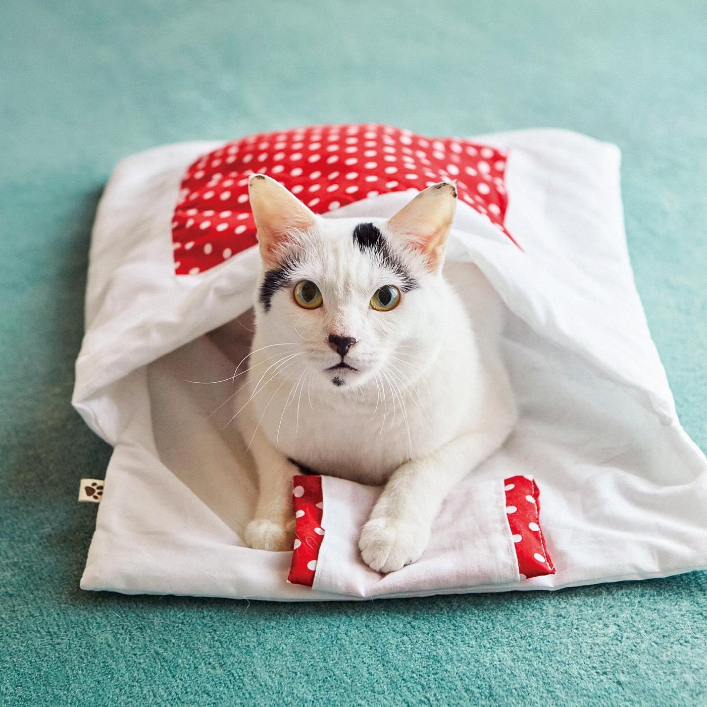 パシャリでみんにゃに自慢!大人気の猫用和布団の会
