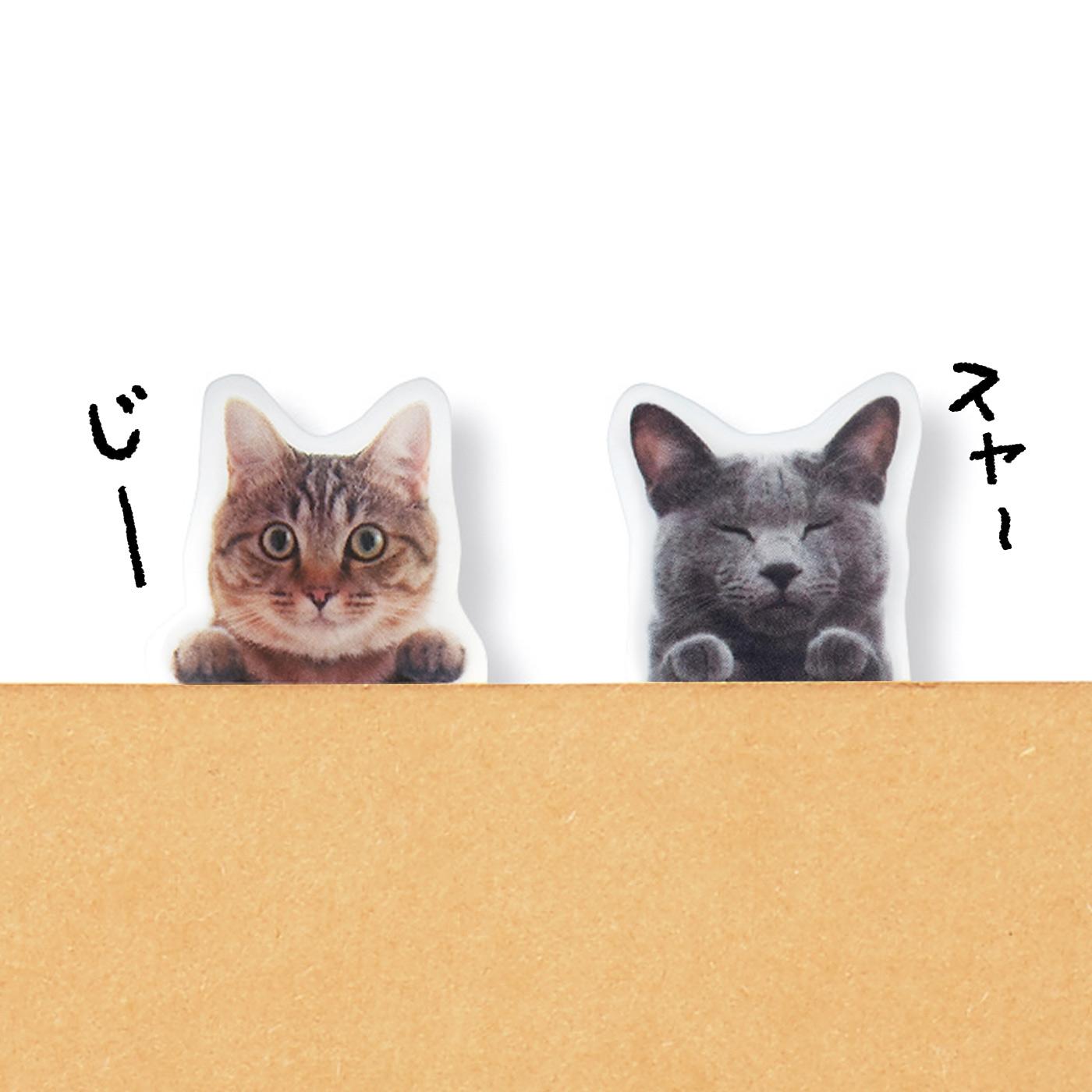 のぞき猫 視線の主はココ! 上からものぞきます。