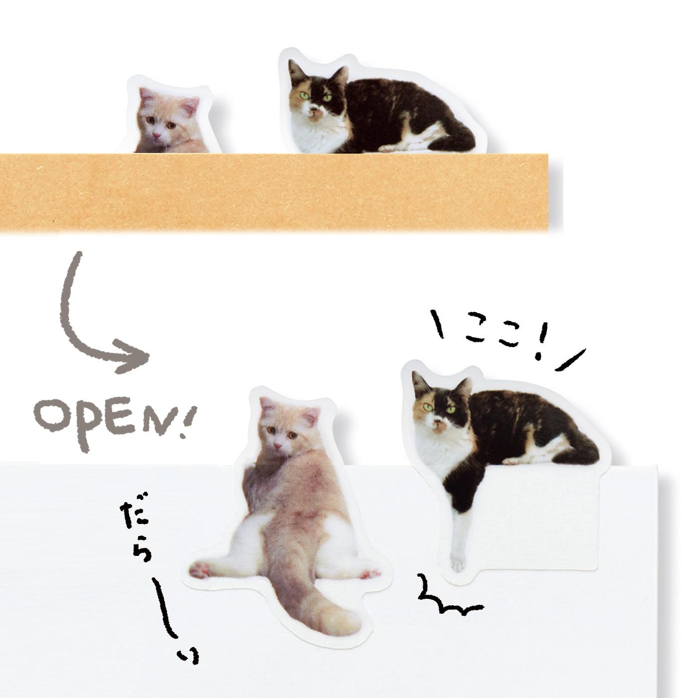 開けると……猫 キリッとこちらを見ていると思ったら、実はこんなことになっていた!