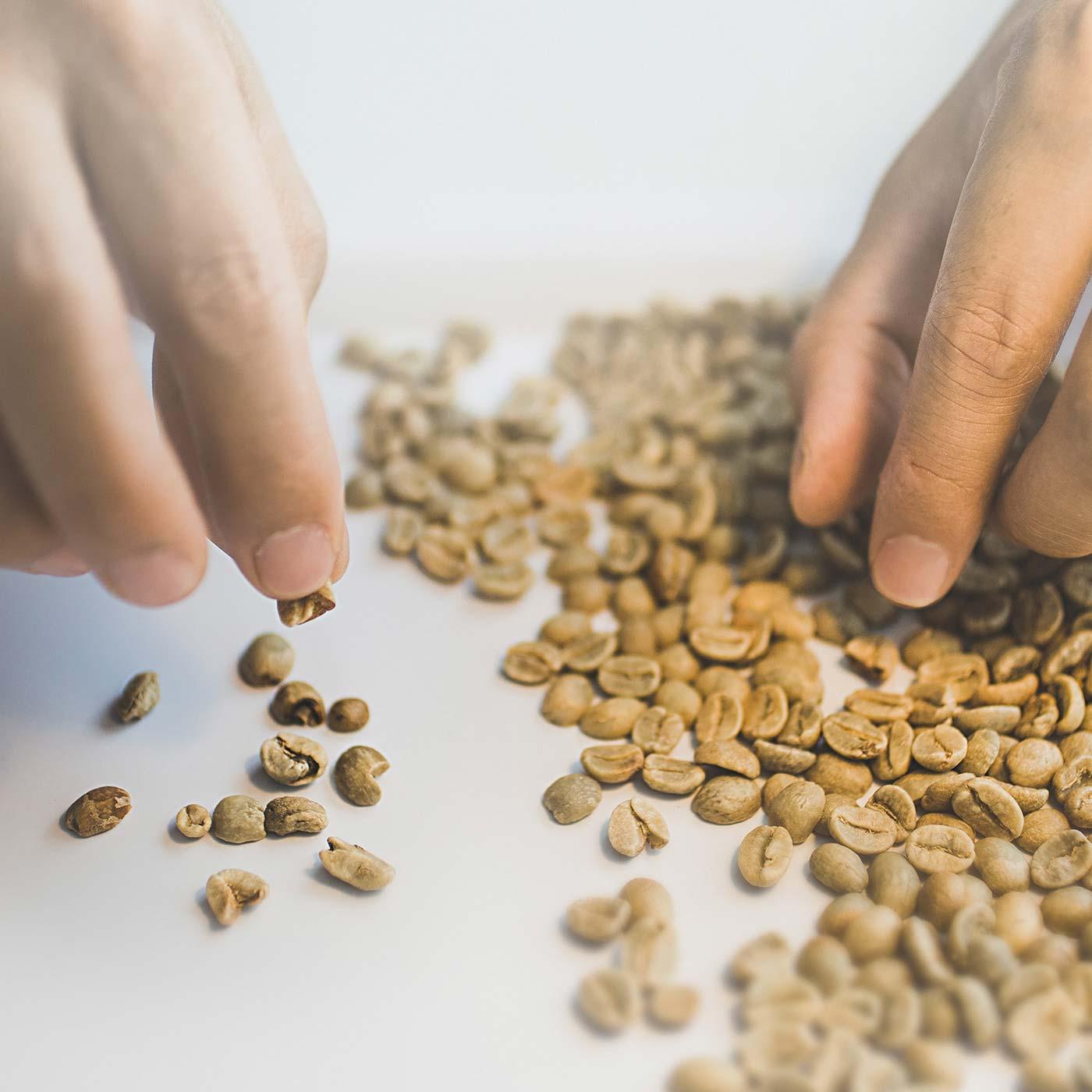 ハンドピックとは、どんな高級豆にも混ざる欠点豆をひと粒ずつ取り除く作業のこと。大変な作業ですが、ビッグスマイルコーヒーは、焙煎前と焙煎後の2度のハンドピックで欠点豆を徹底して取り除いています。 ※写真はイメージです。実際のハンドピックでは、手袋をして作業しています。