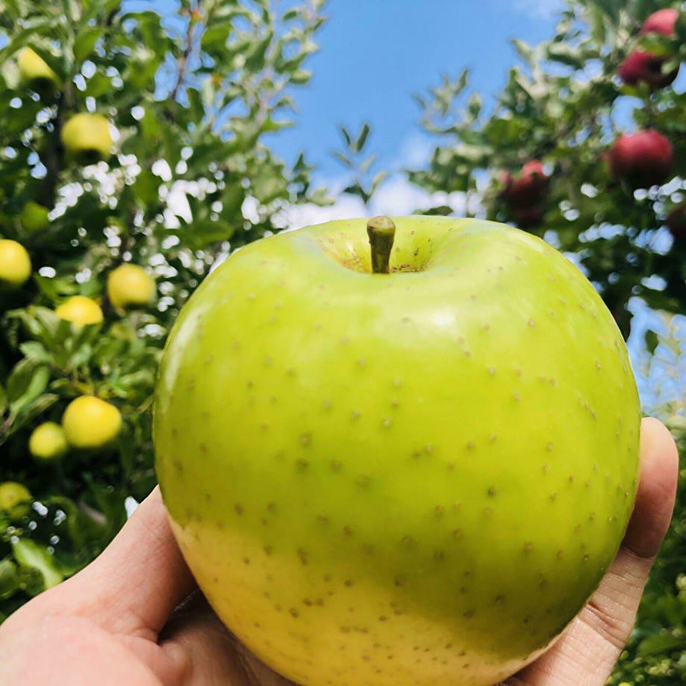 長野県産【ご家庭用】皮ごと食べられるりんご王林5Kg