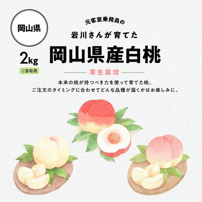 元客室乗務員岩川さんが育てた岡山県産白桃2kg