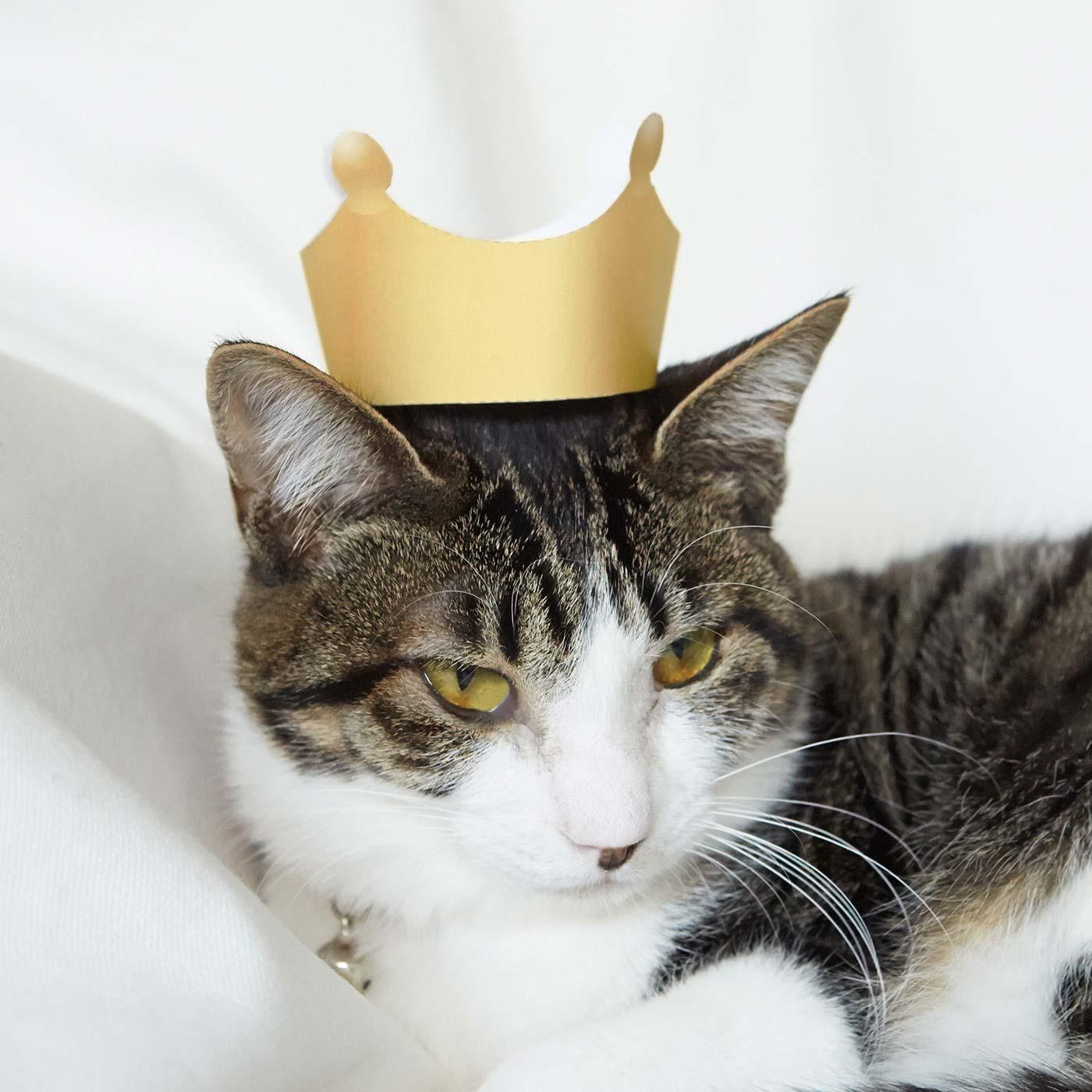 にゃんこと遊べる三種の神器付き! 1. 王冠 てんてん 約2.5kg