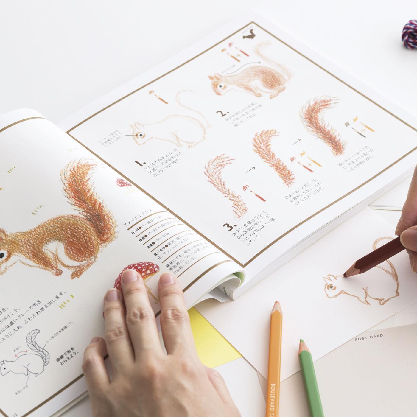 目の特徴は?しっぽのバランスは?毛の特徴は?……とゆっくり見て描ける解説がうれしい!!