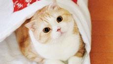 フェリシモ猫部〈フェリシモねこぶ〉