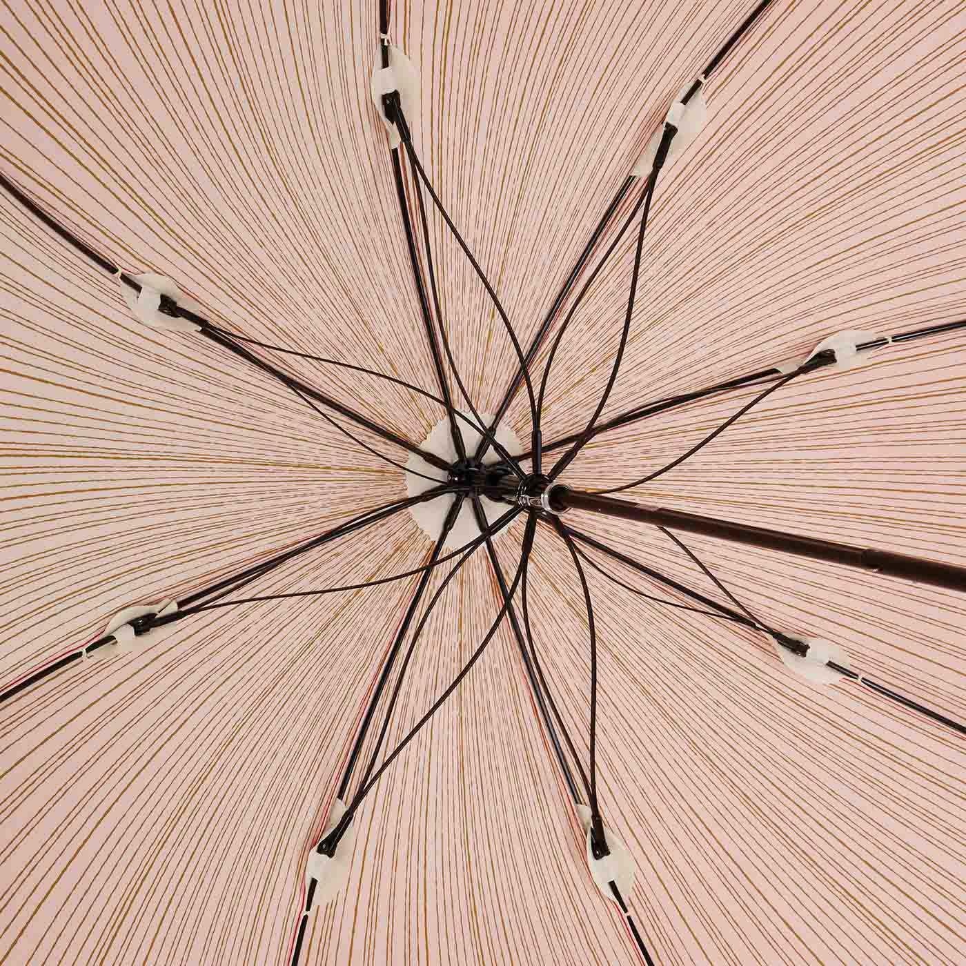傘を広げた骨の形もキノコらしい。