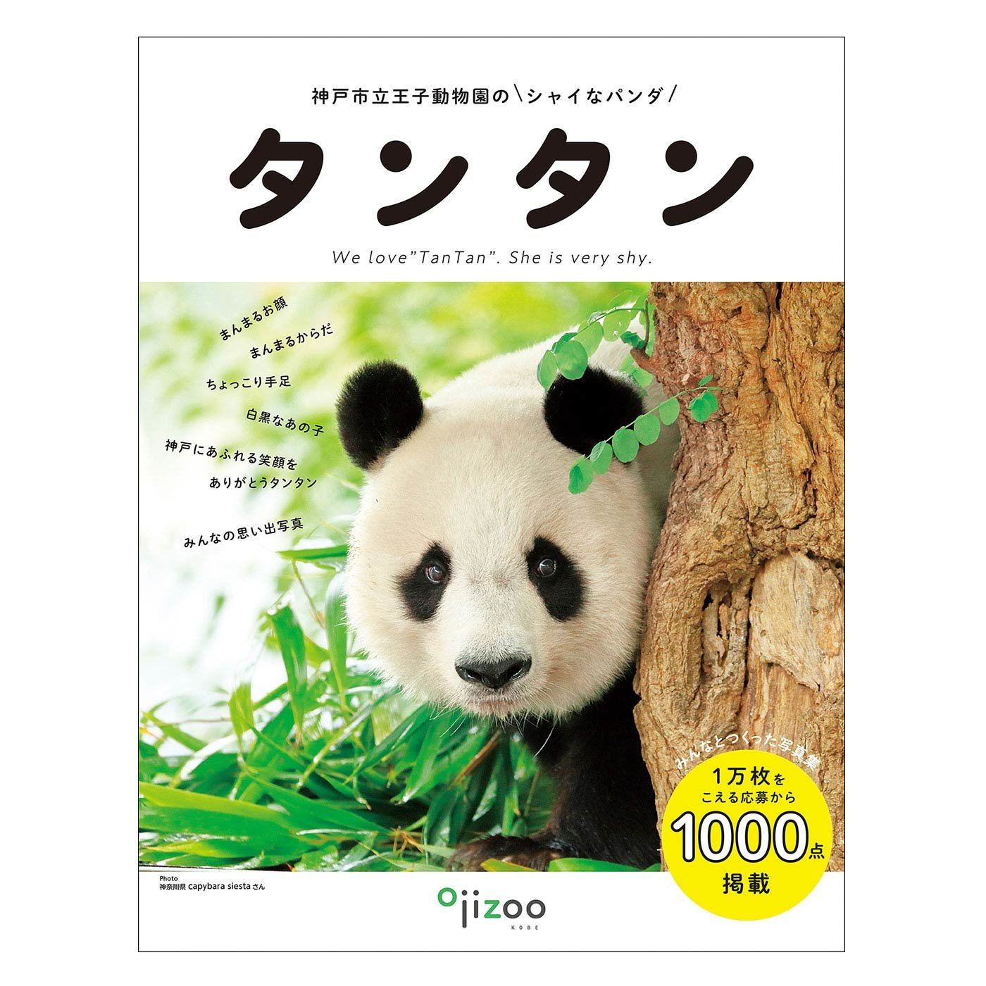 YOU+MORE! 写真集『神戸市立王子動物園のシャイなパンダ タンタン』