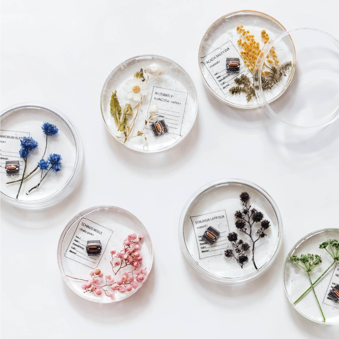 シャーレ皿に収めた植物標本 ジェルキャンドルキットの会