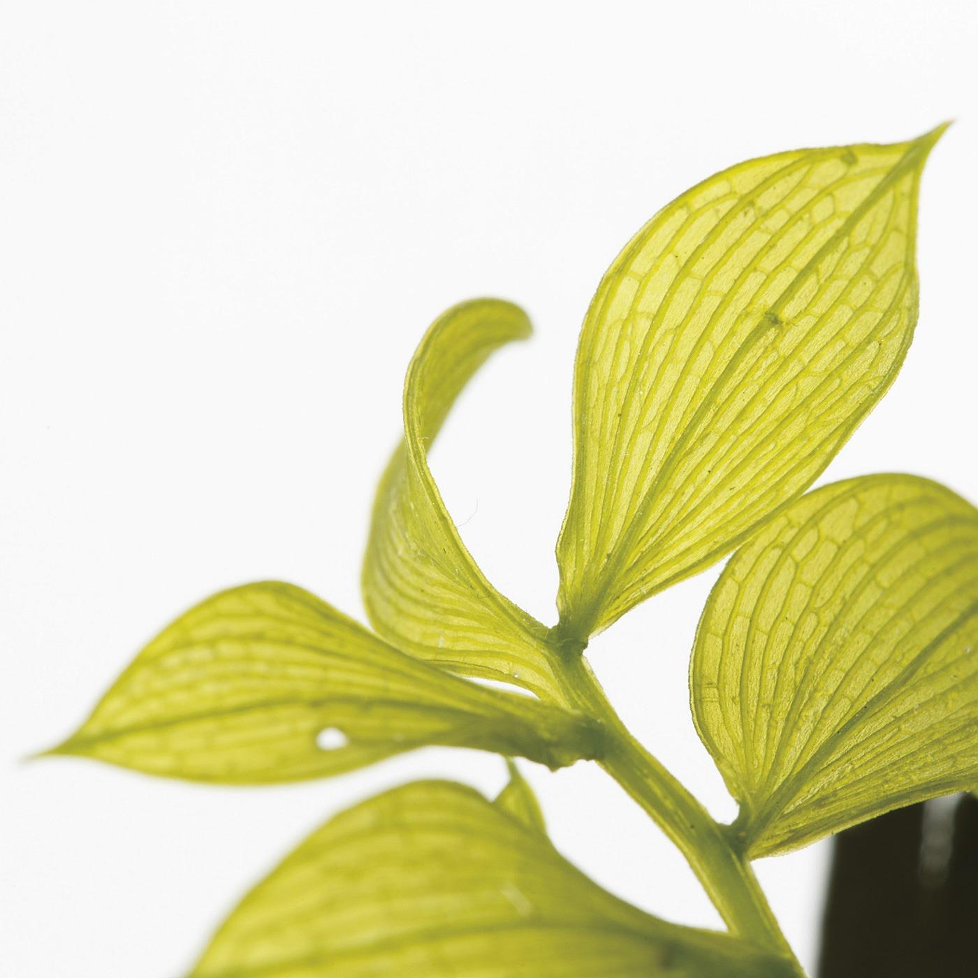 植物から水分を抜いて作るプリザーブドグリーンはいきいきした表情。