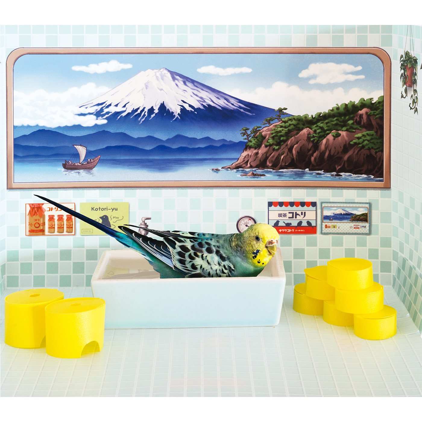 YOU+MORE!×小鳥部 レトロなお風呂で水浴びできちゃう バード銭湯