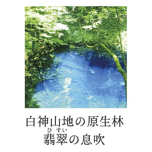 白神産地の原生林翡翠の息吹