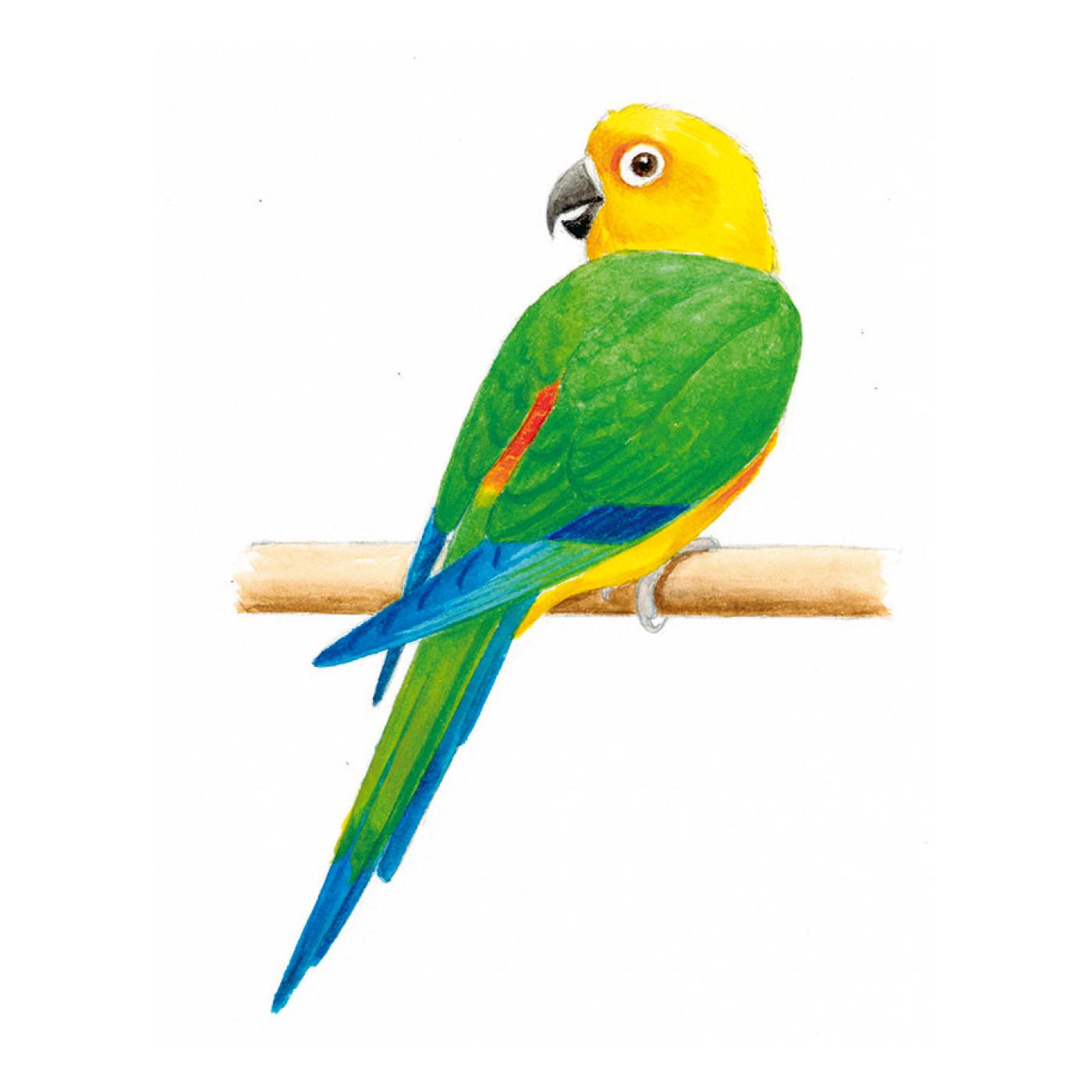 谷口さんが描く、生き生きした鳥たちの姿を刺しゅうに。