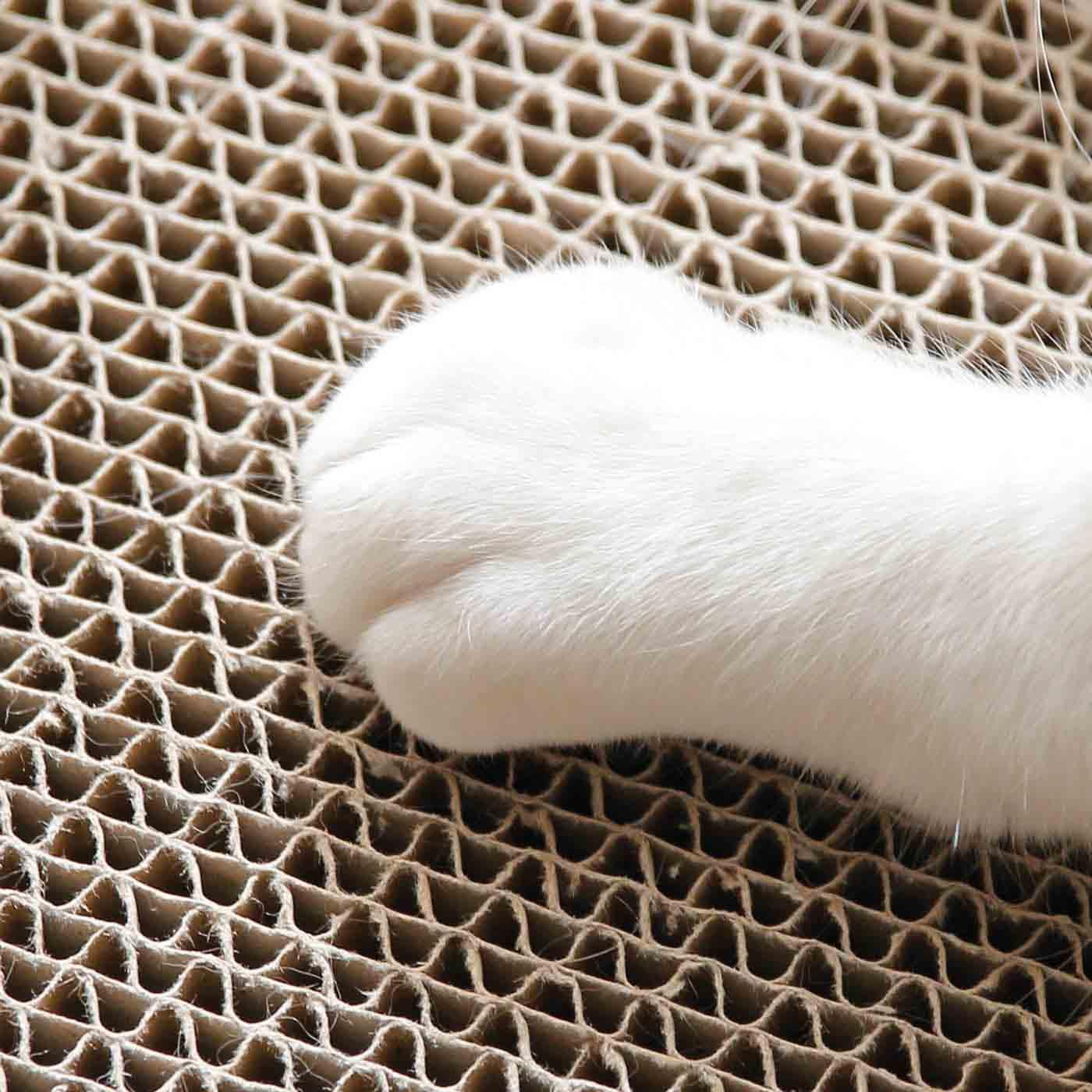 つめのとぎやすさや居心地のよさは猫さんたちのモニター済み。心ゆくまでつめとぎを!