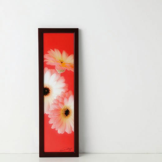 la fleur〈BIRTHDAY garbera~笑顔を咲かせて-2〉photo:yukihito MASUURA