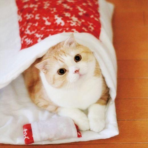おやすみニャン かわいい寝姿を自慢できる 猫用和布団の会