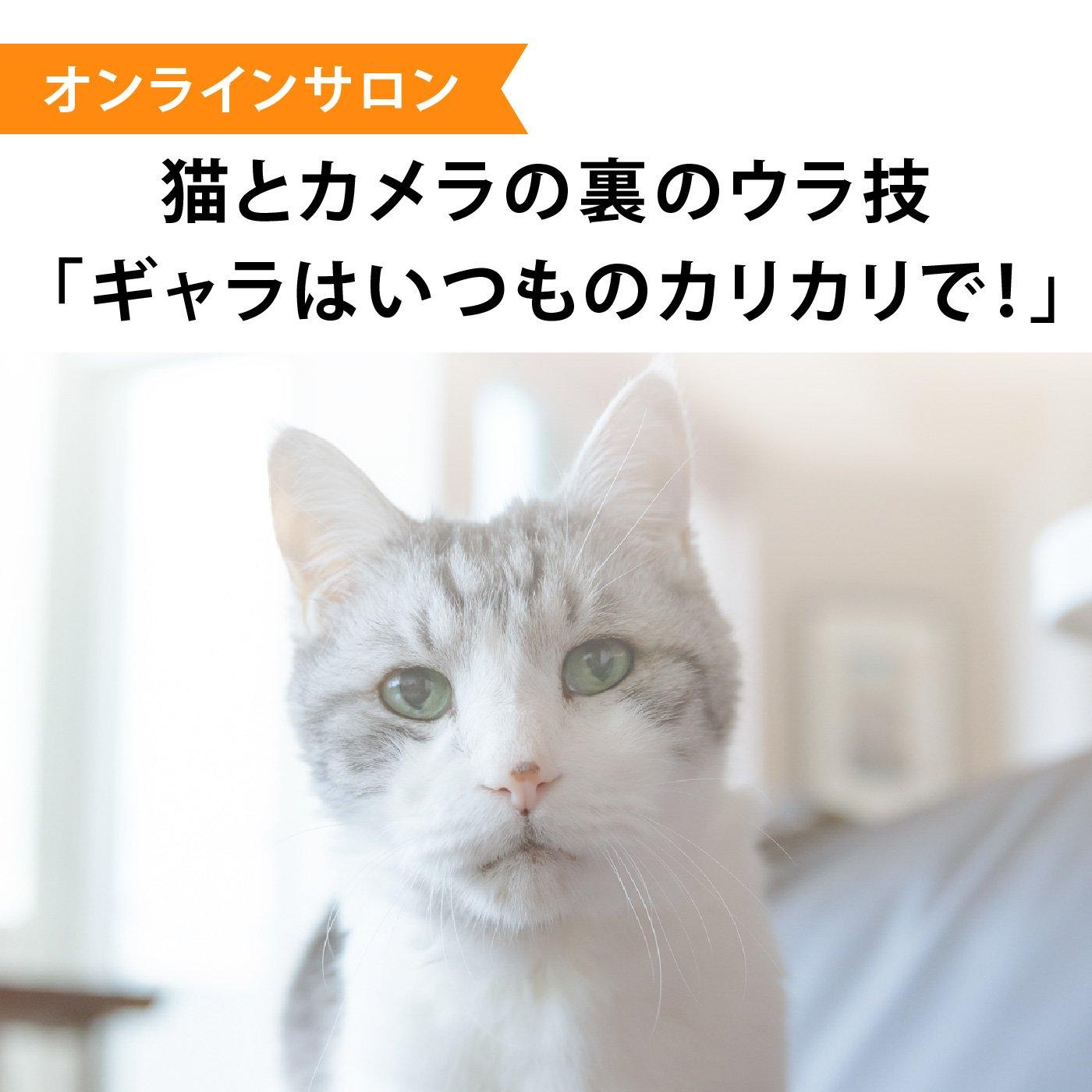 《お申し込み締め切り:2021年1月分まで》【オンラインサロン】猫とカメラの裏のウラ技 「ギャラはいつものカリカリで!」