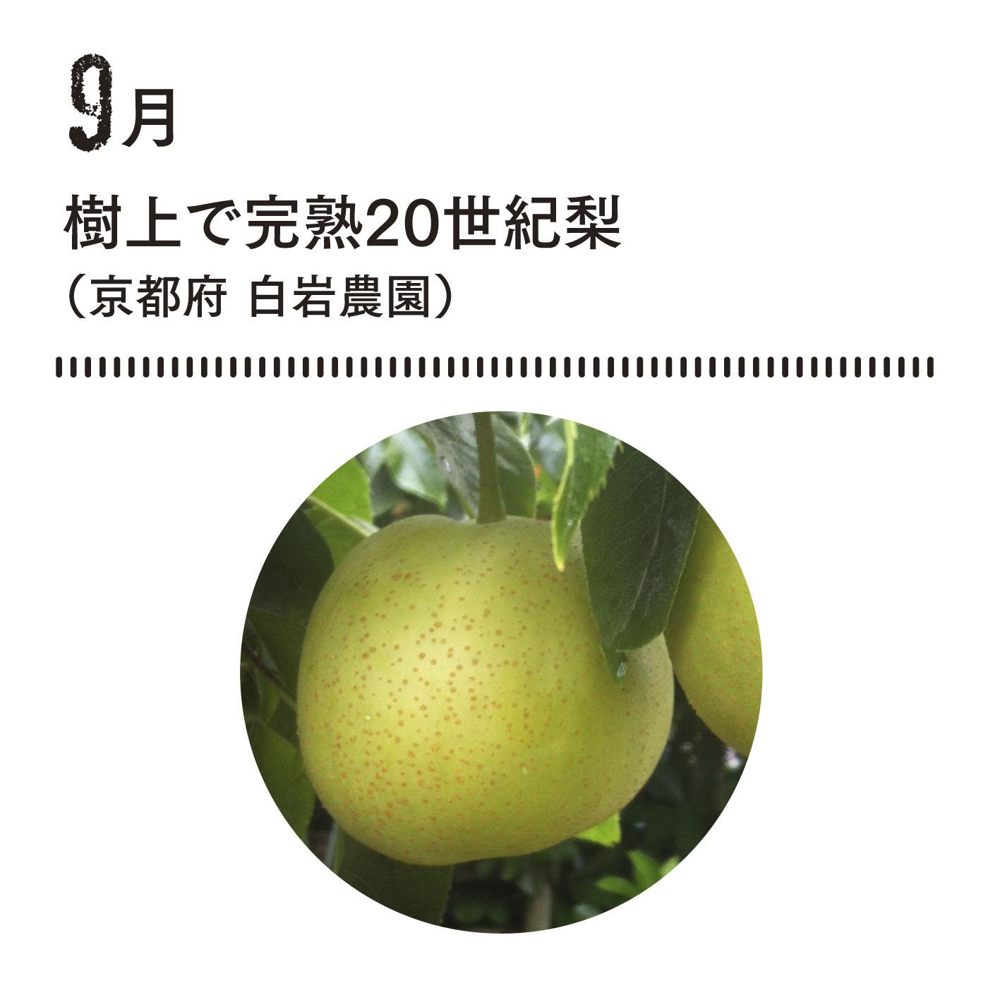 海風を受けて育った梨は水分たっぷりさわやかな甘さ。 完熟のため少し黄色味をおびます。■お届け時期 9月中〜下旬 約1.7kg(5玉)