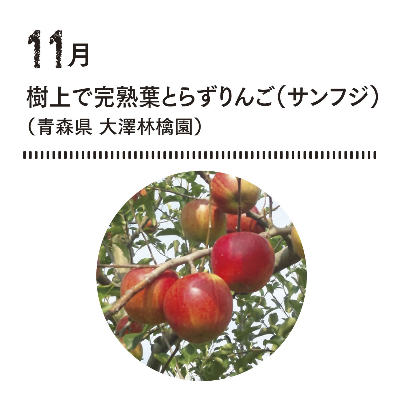 でんぷん質を作る葉をとらないのが甘さの極意! 一般より2週間前後収穫を遅らせ、樹上で完熟。おいしいりんご栽培への取り組みにも感動。■お届け時期 11月下旬〜12月上旬 約2kg(5〜6玉)
