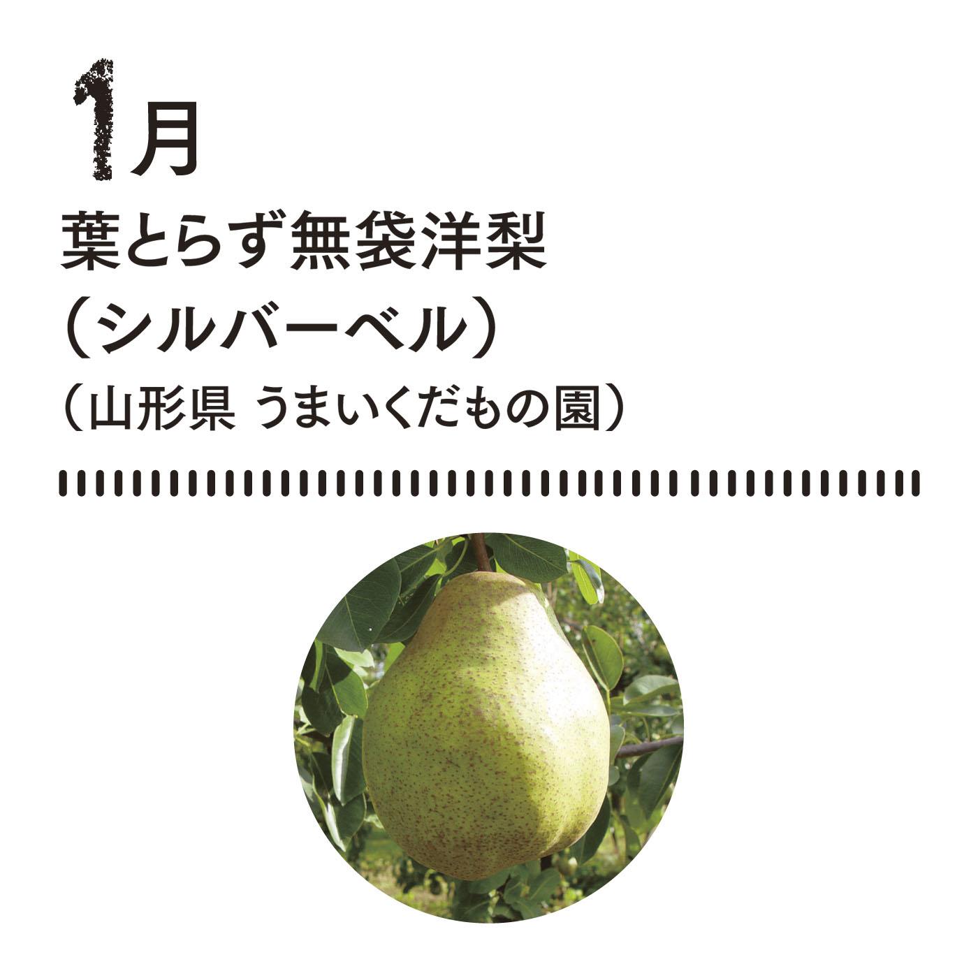 収穫後の追熟温度管理が秘訣! 11月に収穫の最盛期を迎える西洋梨を1月までじっくりと追熟。葉とらず無袋洋梨。■お届け時期 1月中旬 約2kg(5玉前後)