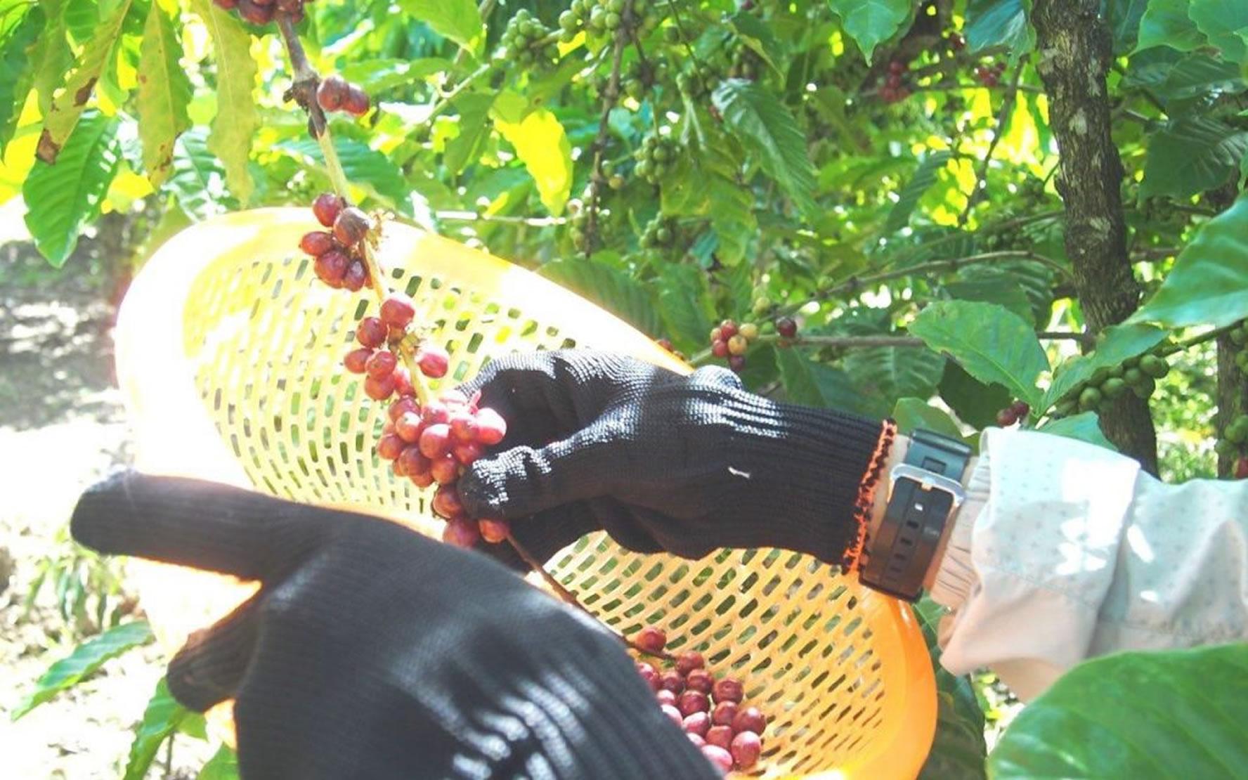 ベトナムのコーヒー農園と日本のチャレンジド、たくさんの思いがつながるBIG SMILE COFFEEのストーリー【前編】