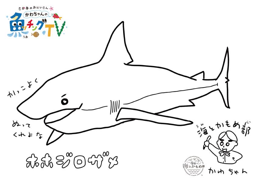 簡単 サメ イラスト 25 ++